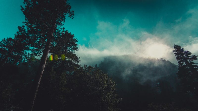 Foggy weather in Orlando causes disturbances