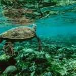Beautiful shot of turtle underwater