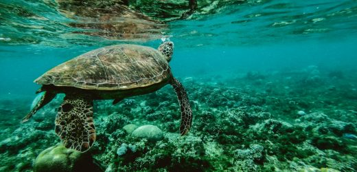 Beautiful shot of turtle underwater